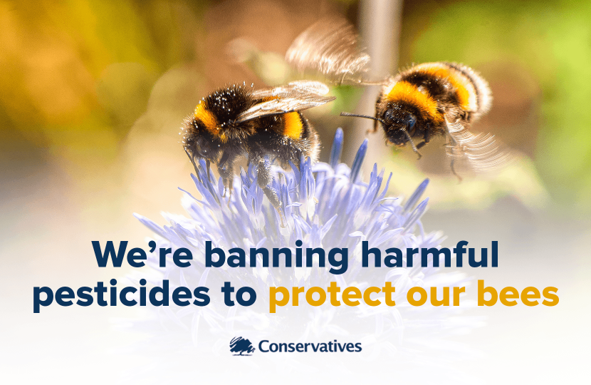 Banning harmful pesticides to protect our bees