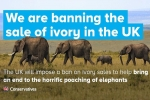 Banning the sale of ivory in the UK