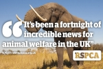 """It's been a fortnight of incredible news for animal welfare in the UK"""